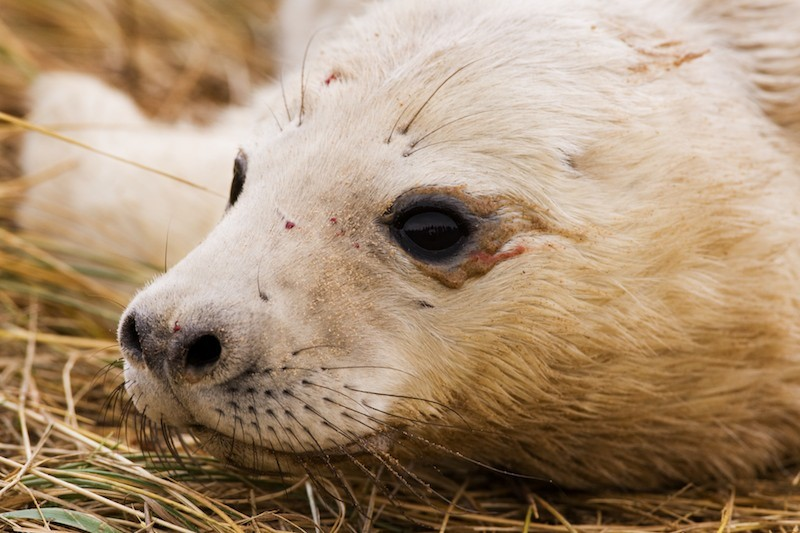 Seals: Nature can be cruel