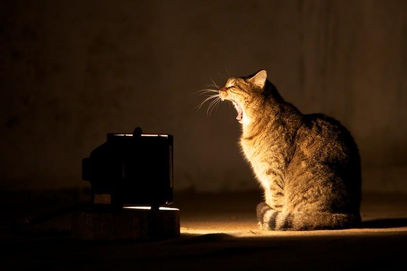 The Cats of Hagia Sophia
