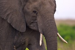 Who could dislike an elephant?