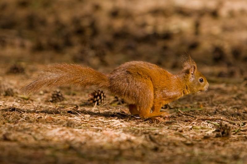 Super fast squirrel, or just crap?