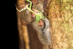 Tarsier - a follow up...