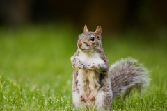 Mrs Squirrel