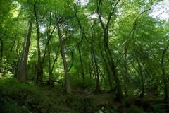 A manmade environment?