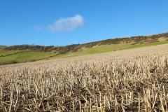 Dorset farming